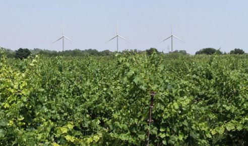 Le projet éolien de Cuxac d'Aude