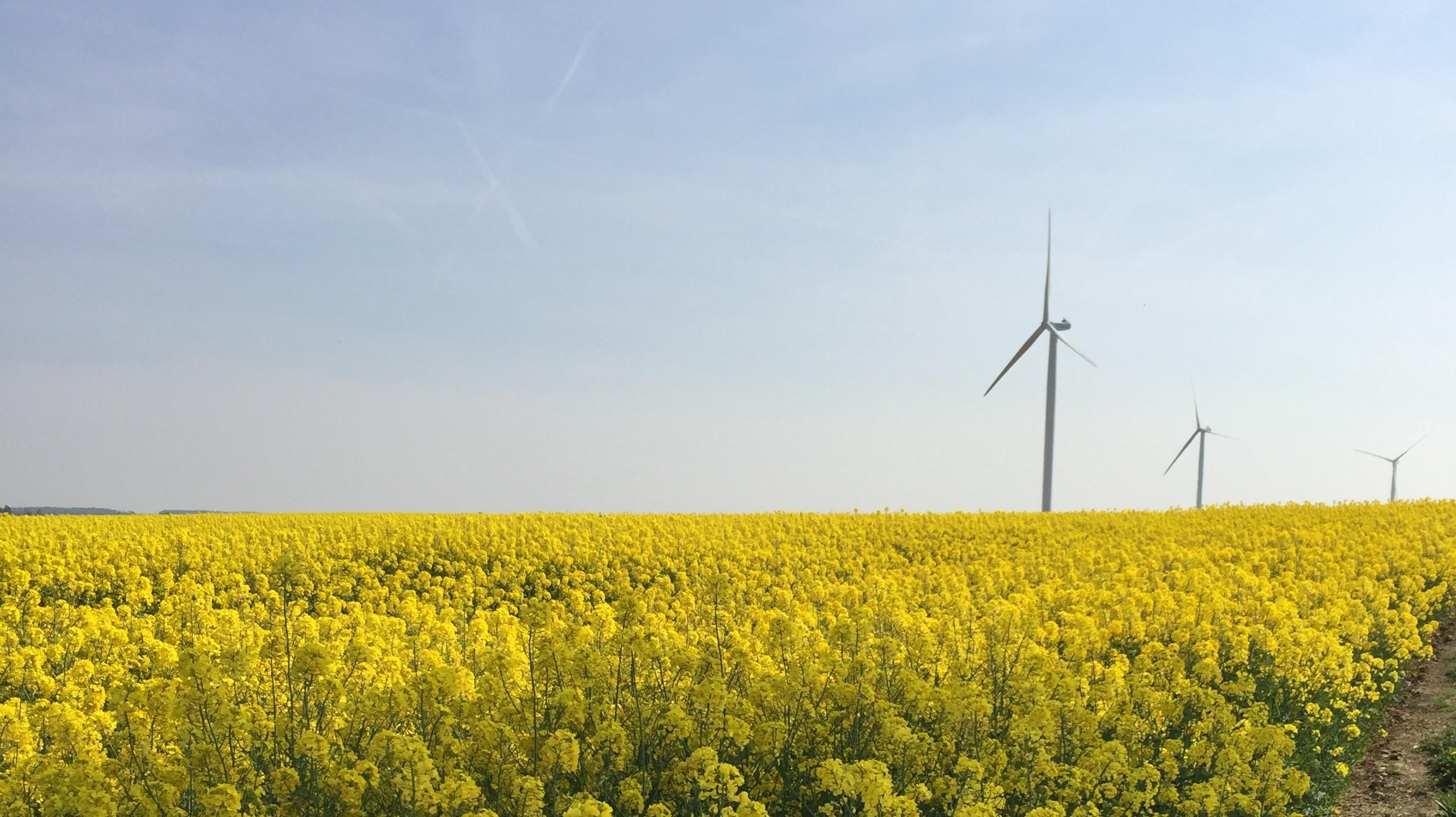 Renouvellement de l'exploitation du parc éolien du Cornouiller